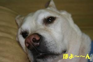 いつでもたあちゃんイチデジ編 006