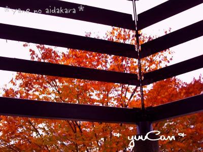 yanenoaida+kiiro+ver_convert_20081109182559.jpg