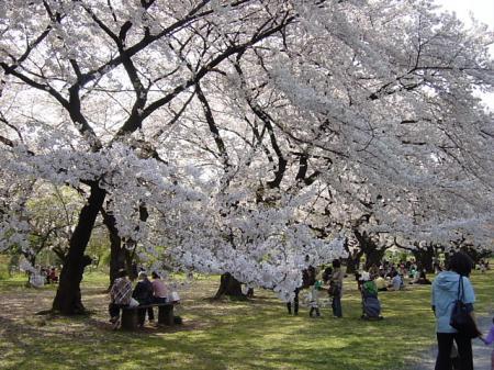2009花見20