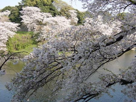 2009花見22