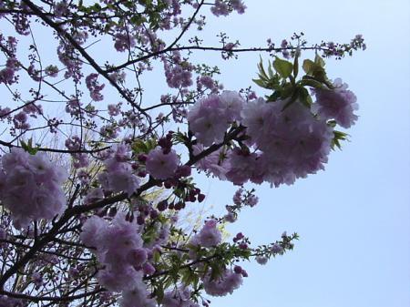 2009花見9