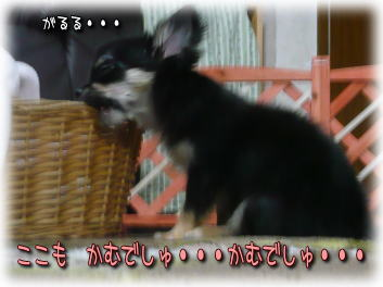 image000910.jpg