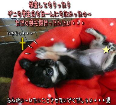 image000914.jpg