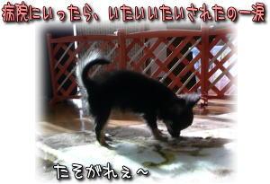 image000915.jpg