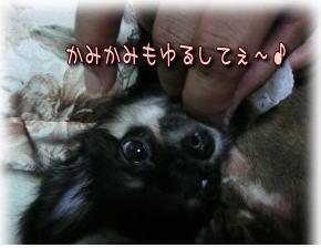 image000939_20081102031808.jpg