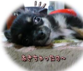 image000946.jpg