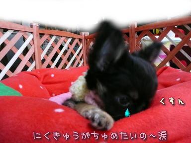 image105.jpg