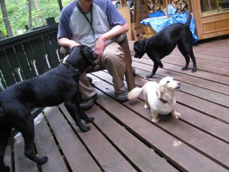 看板犬の3頭