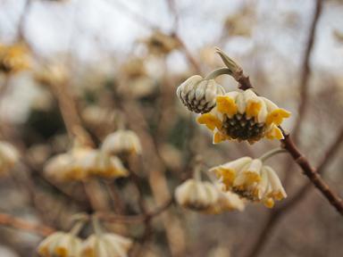 春の足音 2