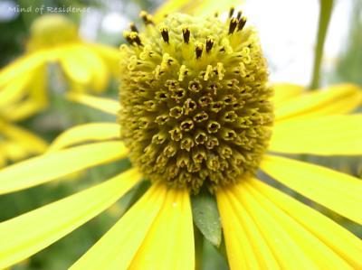 080723_Flower.jpg