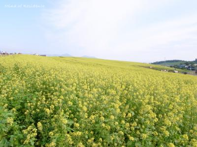 080810_Yellow.jpg