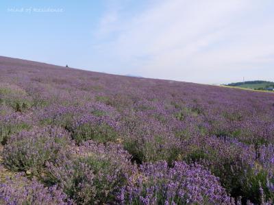 080810_lavender.jpg