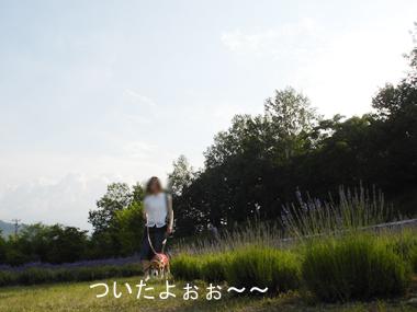 i311d.jpg