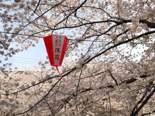 09年春、目黒川の桜