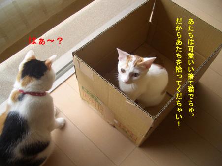 へっ?捨て猫?