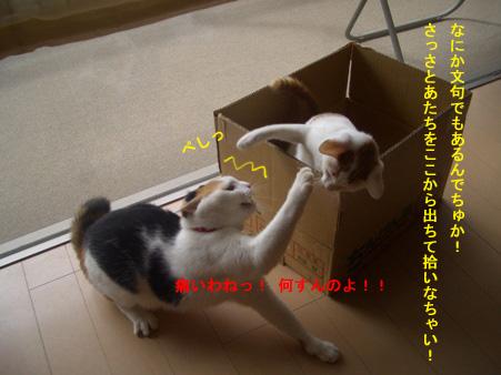 強気な捨て猫