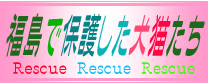 福島で保護した犬猫たち