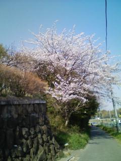花   さくら
