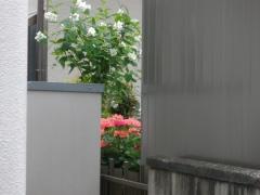 雨です^^;