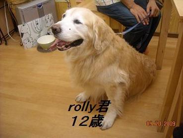rolly君
