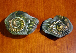 ダクティリオセラスの化石