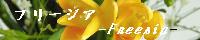 フリージア