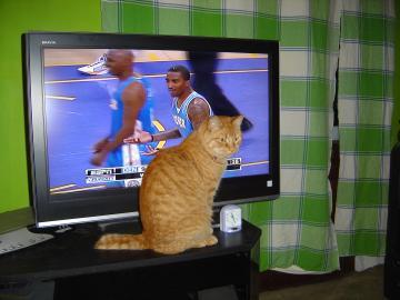 nigi and tv