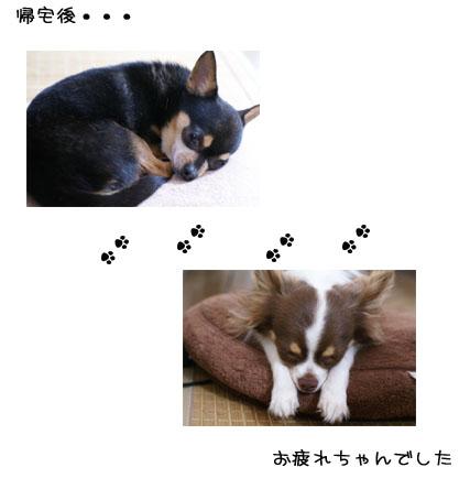 2008072203.jpg
