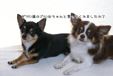 コピー ~ DSC09336