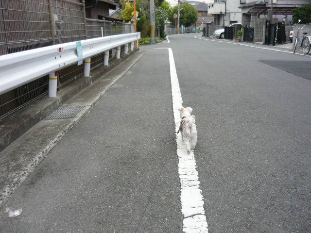 P1370911.jpg