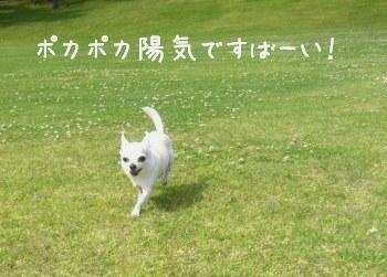 kaiseiegao.jpg