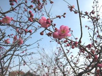 もうすぐ春だねェ・・・(=ω =;)