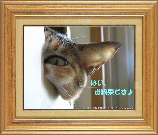 ねこ 猫 家政婦祭り 02番 タカ君の「家政婦のお約束」