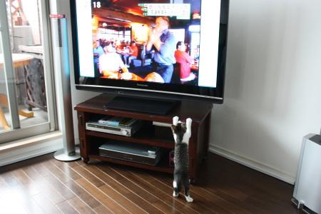 TVが好き