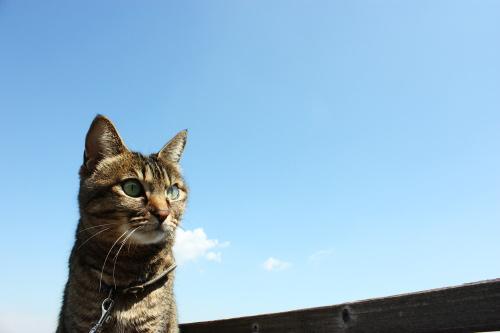 アイ、空を見る