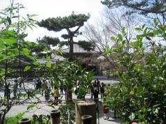 20090321-uji3.jpg